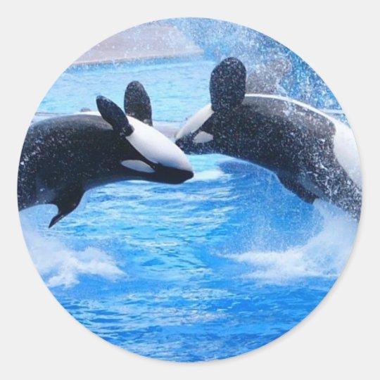 Whale Photo Sticker