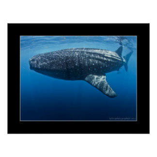 Whale shark #4 poster