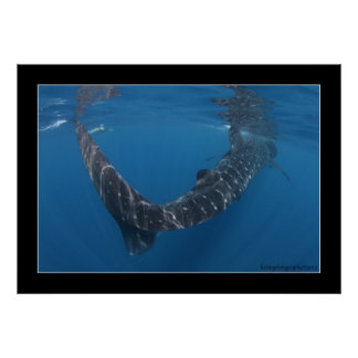 Whale shark 6 poster