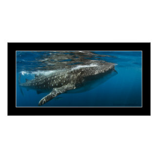 Whale shark #7 posters