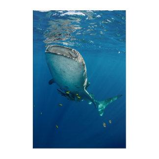 Whale Shark and Fish Acrylic Wall Art