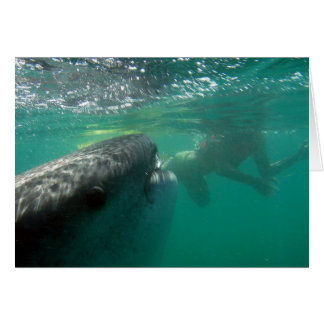 Whale Shark and Snorkeler Greeting Cards