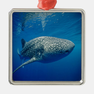 Whale Shark Christmas Ornament