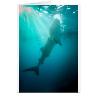 Whale shark feeding card