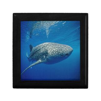 Whale Shark Gift Box