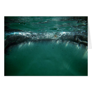 Whale Shark, Isla Holbox, Mexico Card