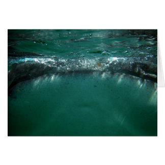 Whale Shark, Isla Holbox, Mexico Greeting Card