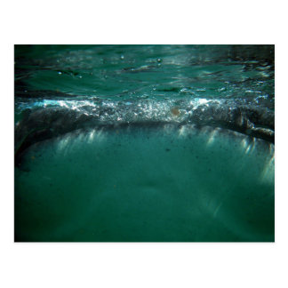 Whale Shark Isla Holbox Mexico Post Cards