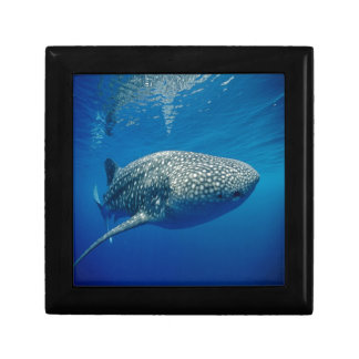 Whale Shark Small Square Gift Box
