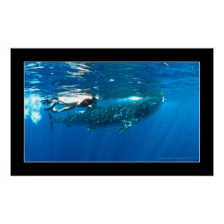 Whale shark snorkeling posters