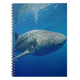 Whale Shark Spiral Notebook