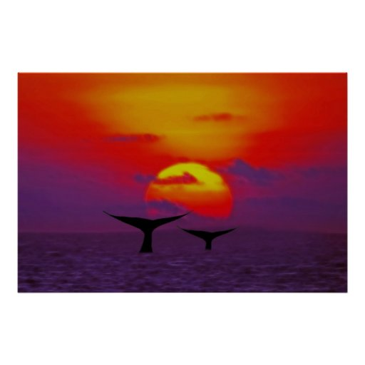 Whale tails at sunset poster