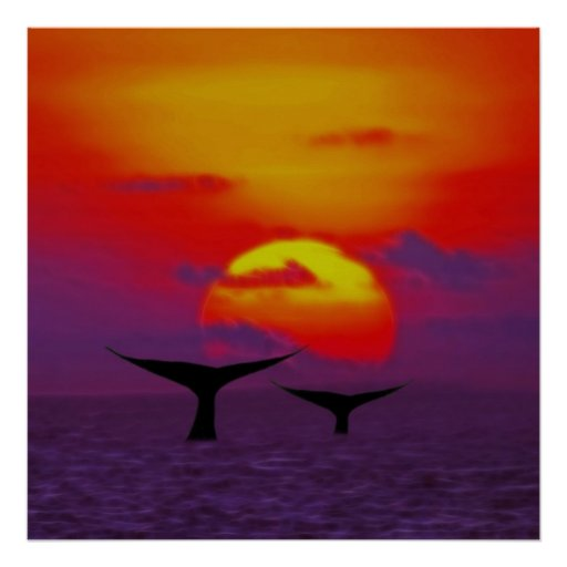 Whale tails at sunset posters