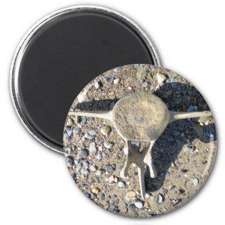 whale vertabra (2) 6 cm round magnet