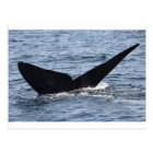 Whale-watching - Southern right whale print Postcard