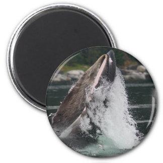 whales 6 cm round magnet