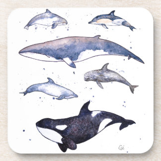 Whales and dolphins of Scotland Coaster