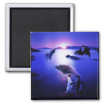 Whales dolphins penguins ocean sunset square magnet