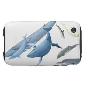 Whales iPhone 3 Tough Covers