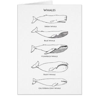 Whales Logo Card