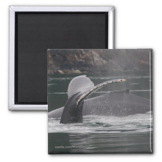 Whales Square Magnet