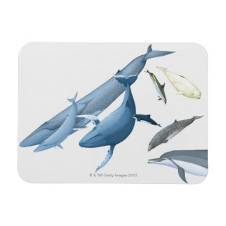 Whales Magnet