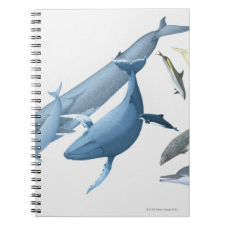 Whales Notebooks
