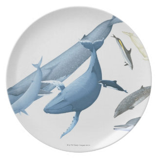 Whales Plate