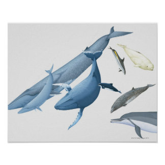 Whales Posters