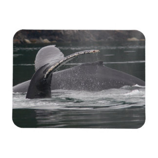whales magnets