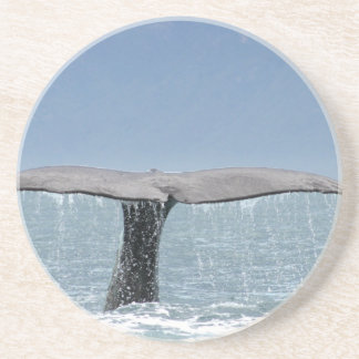 Whale's Tail Coaster