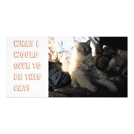 What I would give to be this cat! Custom Photo Card