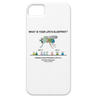 What Is Your Life's Blueprint? (Gene Expression) iPhone 5 Case