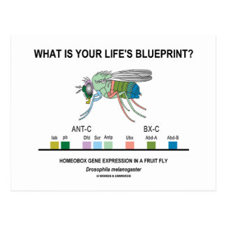 What Is Your Life's Blueprint? (Gene Expression) Postcards