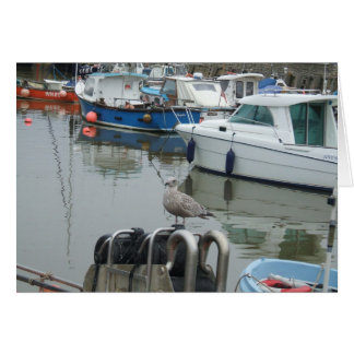 What`s a Gull like you doing in a place like this. Greeting Card