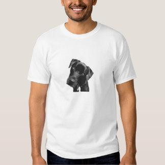 What Shirt