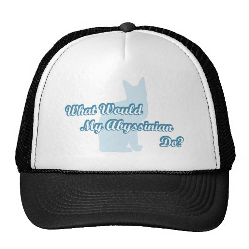 What would my abyssinian do? hat