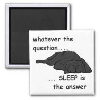 whatever the question... magnet