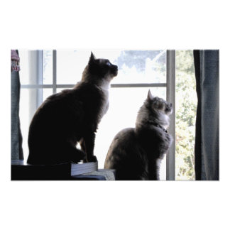 Whats Out There? Curious Cats Kitties Photography Photographic Print