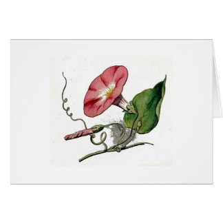 Whats the story morning glory? greeting card