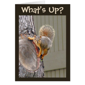 What's Up? Squirrel Photo Greeting Card