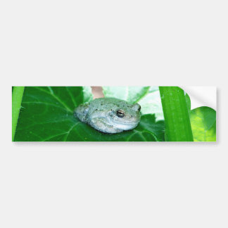 What's Up, Tree Frog Bumper Sticker