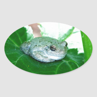 What's Up, Tree Frog Oval Sticker