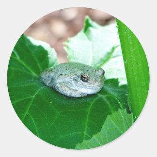 What's Up, Tree Frog Round Sticker