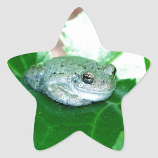 What's Up, Tree Frog Star Sticker