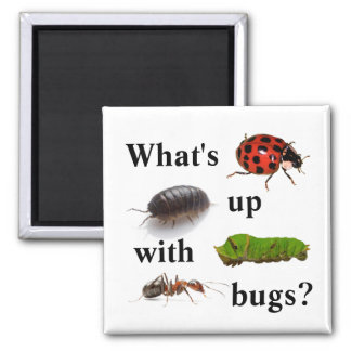 What's up with bugs? the magnet