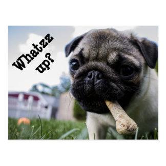 Whatzz up Pug Postcard