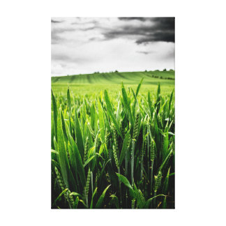 Wheat and landscape stretched canvas print