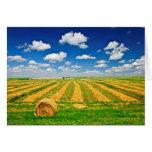 Wheat farm field at harvest cards