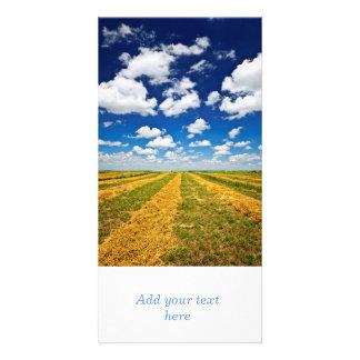 Wheat farm field at harvest photo cards